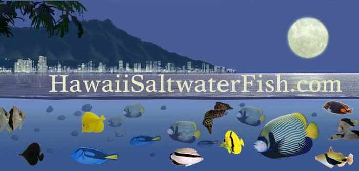 Hawaii Saltwater Fish – RT Distributors – (808) 259-9997