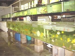 aquariums_fs